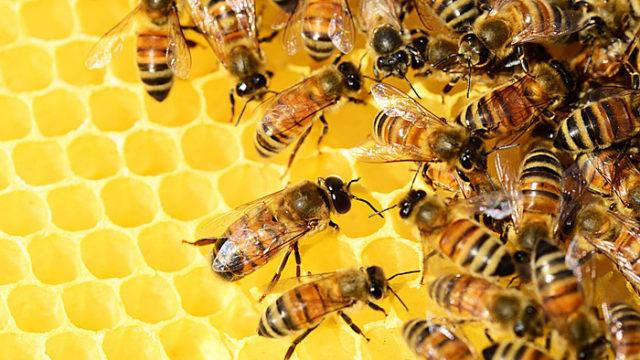 ハチ 花の蜜 ハチミツ