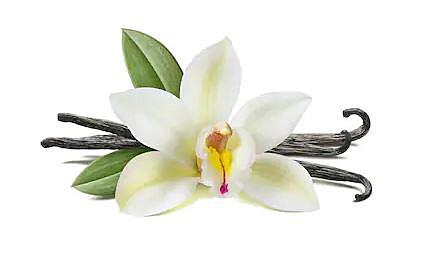 バニラ 花